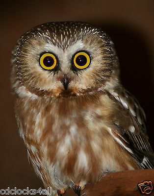 Owl GLOSSY Photo Picture Wall Decor / Print * PICK YOUR SIZE * - Owl Photo
