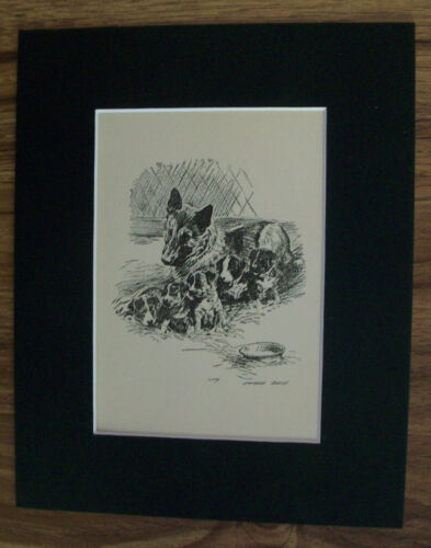 Print German Shepherd Dog Morgan Dennis Mom Pups 1937 Bookplate 8x10 Matted