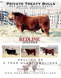 Private Treaty Bulls-Red Angus, Black Angus, Polled Hereford