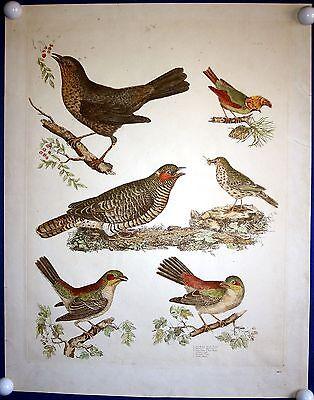 VÖGEL - sehr schöner handkolorierter Kupferstich von Selby um 1825 - Original!