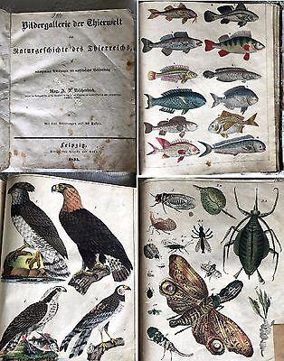 1835 Bildergalerie der Thierwelt, Naturgeschichte des Thierreich Reichenbach RAR