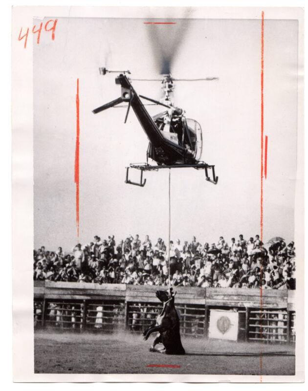 1961 Vintage United Press Photo Helicopter dead bull Barrancabermeja Columbia