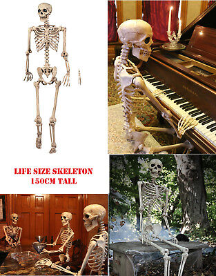 150cm Poseable Full Life Size Human Skeleton Halloween Decoration Party - Life Size Skeleton Decoration