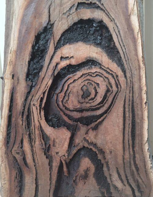 Salmon Gum Timber Slab Building Materials Gumtree Australia Joondalup Area Hillarys