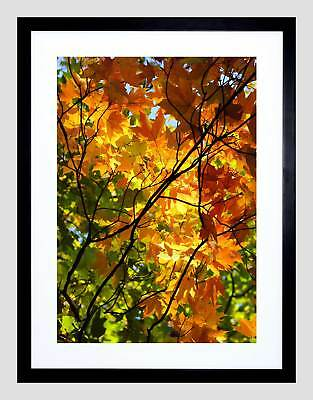 PHOTO TREE BRANCHES FALL AUTUMN NEW BLACK FRAMED ART PRINT PICTURE B12X11004
