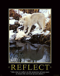 Gray Wolf Motivational Poster Art Timber Wolves Wildlife Lone Wolf WWF DENV75