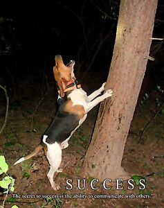 251251804533 likewise 111290350984 furthermore Dog Pulling Harness together with 360738206491 in addition 281482182697. on best buy dog tracking