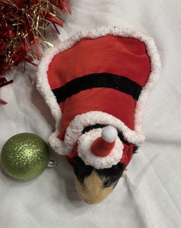 Guinea Pig Santa Costume Piggie Christmas Pet Outfit Holiday Custom Made