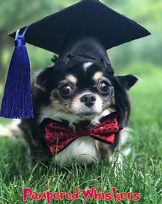 Dog Graduation cap/hat for small sized dogs with 6-11