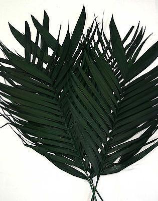 5 Stück Arekapalmwedel 120cm SG echte Palmwedel Palmenwedel Echtblattwedel