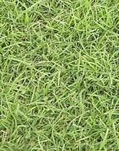 Turf / lawn - Kikuyu, Couch, Palmetto Ebenezer Hawkesbury Area Preview