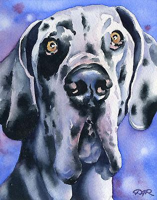 HARLEQUIN GREAT DANE Painting DOG 8 x 10 Art Print Signed by Artist DJR
