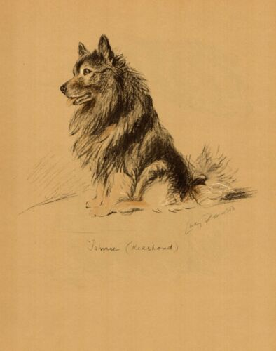 1940 Antique Keeshond Dog Print Lucy Dawson Keeshond Art Illustration  3841t