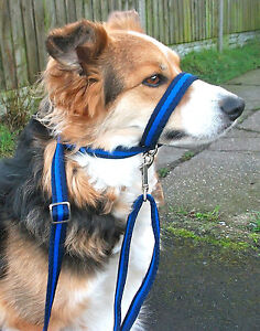 Figure of 8 dog headcollar lead in 19mm soft cushion web