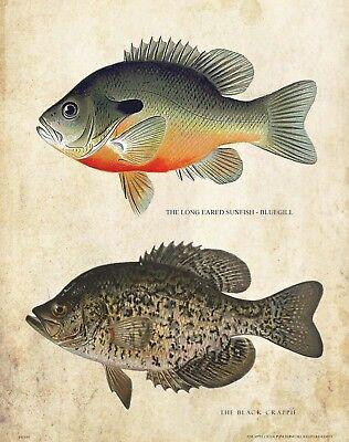 Vintage Fly Fishing Lure Patent Art Print Brook Trout Fish Decor Club PAT464