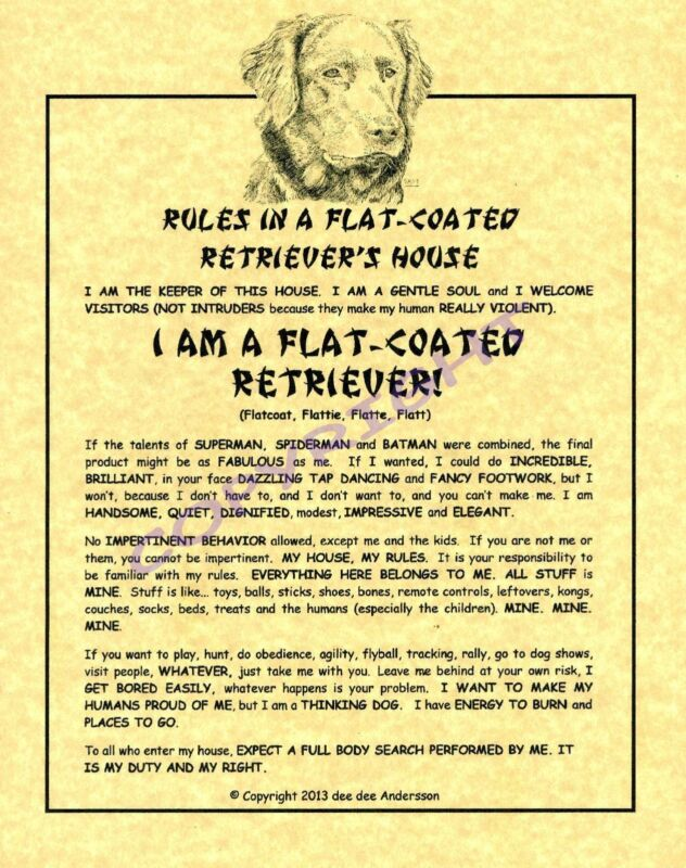 Rules In A Flat-Coated Retriever