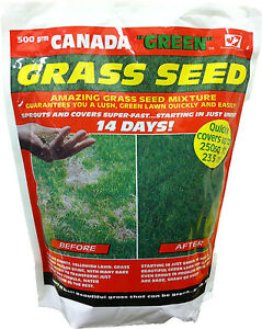 500gm Genuine Original Canada Green Grass Seed fast growing 250sq ft  free post