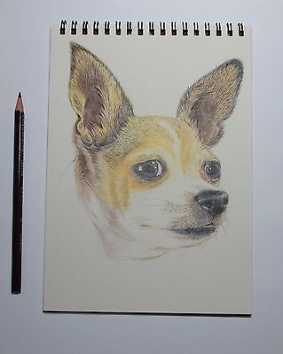 Pet Portrait Colored Pencil Drawing Dog Chihuahua