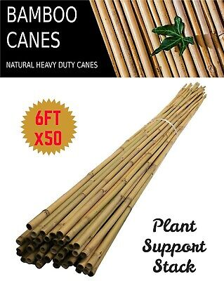 6FT x 50 Heavy Duty Thick Quality Bamboo Garden Canes Strong Plant Support Poles