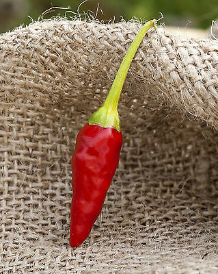 African Pequin Birds Eye Heirloom Pepper Premium Seed Packet