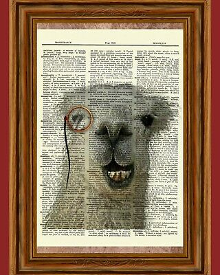 Funny Monocle Llama Dictionary Curious Art Print Poster Picture Book Fun Animal