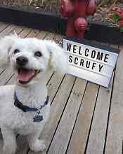 Charlie's Dog Sitting Service Dingley Village Kingston Area Preview