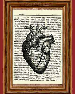 Human Heart Dictionary Art Print Vintage Picture Poster Anatomy Organ