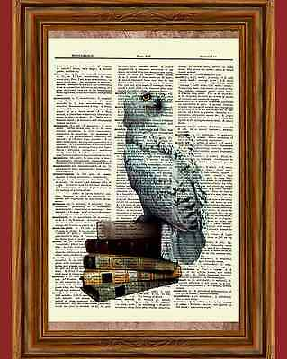 Hedwig Owl Dictionary Art Picture Poster Books Harry Potter Vintage - Harry Potter Owl Hedwig