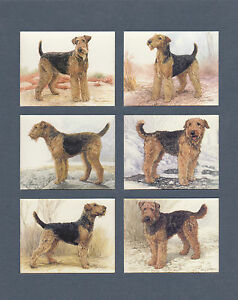 IMPERIAL-PUBLISHING-LTD-SET-OF-L-6-AIREDALE-TERRIERS-DOG-CARDS
