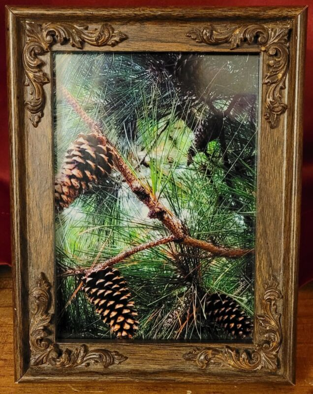5x7 Pine Tree Nature Original Photography In Wooden Detail Frame