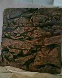 45cm Reptile background Victoria Point Redland Area Preview