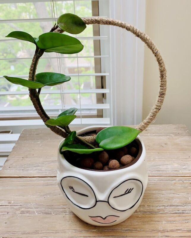 Indoor Plant Hoop Trellis For Climbing Plants