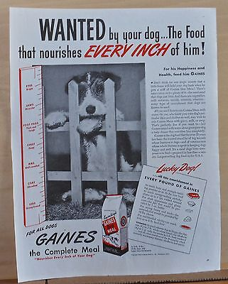 1945 magazine ad for Gaines Dog Food - cute Airedale puppy, for his happiness (Happy Pet Food)