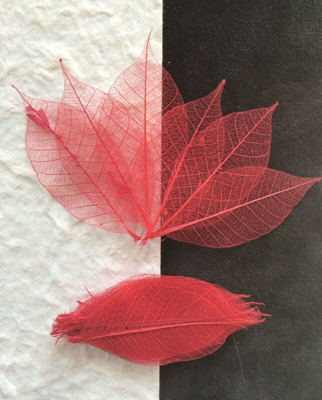 25 Skeleton Leaves Red Small leaf Cards soapmaking Christmas Valentines Crafts