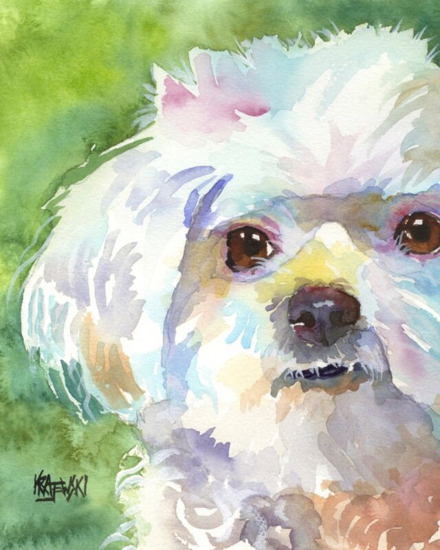 Maltese Art Print Signed by Artist Ron Krajewski Painting 8x10 Dog