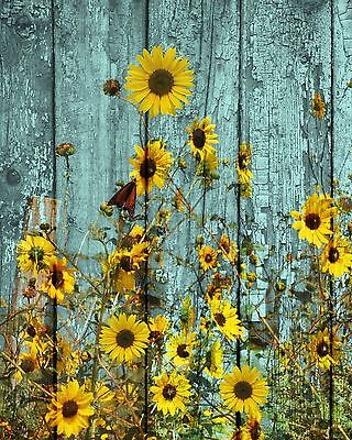 Rustic Sunflowers Butterfly Country Farmhouse Wall Art Home Decor Matted Picture
