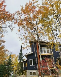 4 Season Cottage/Cabin for rent