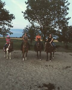 Lessons and trail rides available