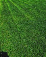 Eco-Lawn.. Professional lawn and Garden Care