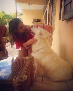 Pet sitter / Dog walker