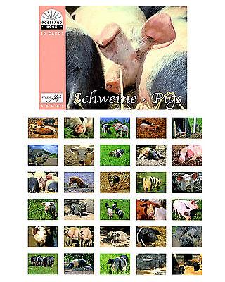 Postkartenbuch Schweine 30 Postkarten Tiere /  B-Ware