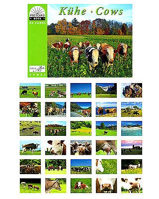 NEU: Postkartenbuch Kühe 30 Postkarten Tiere