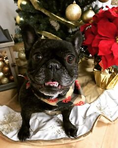 Holiday special at Amy's Grooming