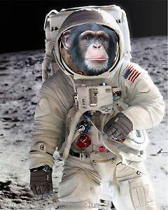 chimpanze astronaut - photo #15