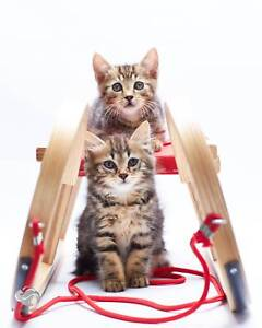 Kittens taking Parental Applications