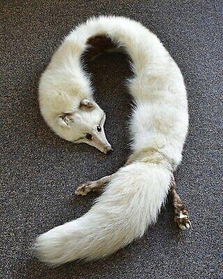 Echarpe fourrure col étole renard argenté avec tête