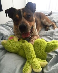 Need a dog sitter! Robina Gold Coast South Preview