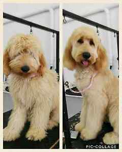 K9 BARBER SHOP, PROFESSIONAL DOG GROOMING Griffin Pine Rivers Area Preview