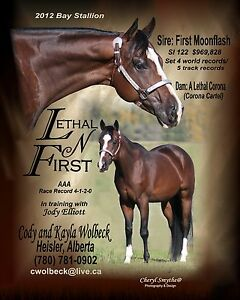 LETHAL N FIRST AT STUD! FIRST MOONFLASH X CORONA CARTEL DAUGHTER