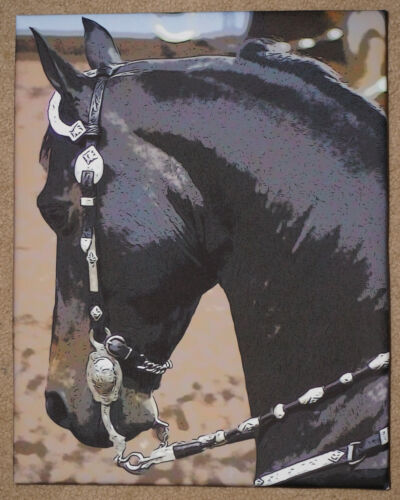 "MORGAN HORSE Head Photographic Art on CANVAS Western 11"" x 14"""
